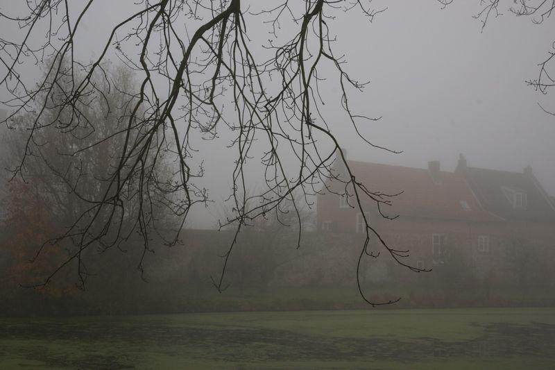 Foggy6