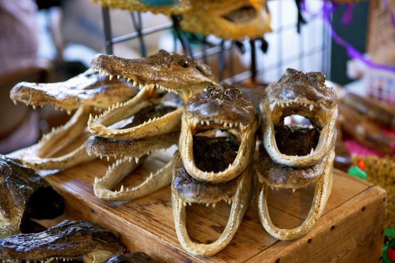 Gatorheads