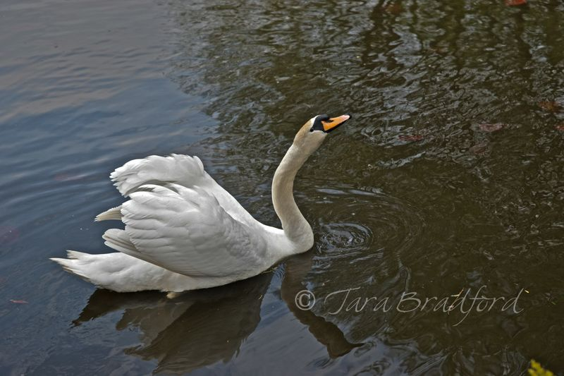 Copyright Tara Bradford Photography - All rights reserved. Do not copy; do not pin!_-6