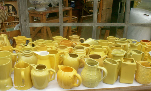 More_yellow_pitchers