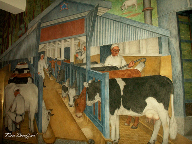 Milking_the_cows