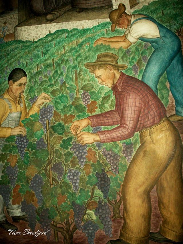 Picking_grapes