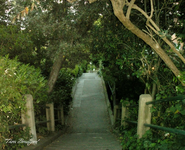 Path_leading_down_steps_near_coit_t